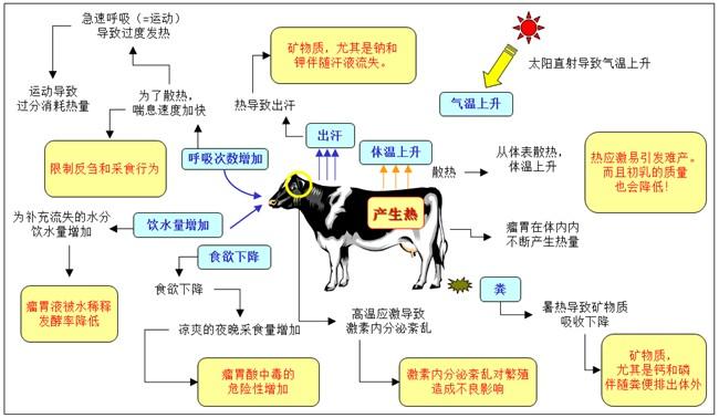 养牛基础知识角:奶牛夏季热应激措施